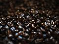 Coffee Festival Toba 2017 Siap Pikat Para Penikmat Kopi