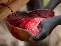 Setiap setahun sekali pria suku Bodi berkompetisi untuk menjadi yang tergemuk. Cara dengan rajin mengonsumsi ramuan campuran darah dan susu sapi. (Foto: Instagram/phcitytraffic)
