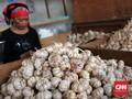 Darmin Tegaskan Impor Bawang Putih Tetap Jalan