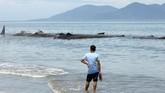 <p>Sepuluh ekor paus terdampar di PantaiKreung, Aceh Besar, Aceh, Senin (13/11). Lokasi terdamparnya paus tak jauh dariBalai Pendidikan dan Pelatihan Ilmu Pelayaran (BP2IP) Kementerian Perhubungan di Aceh Besar.(AFP PHOTO / Chaideer MAHYUDDIN)</p>