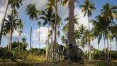 Pulau ini dikelilingi dengan hutan mangrove terbesar di Wakatobi dengan luas 12,3 km persegi dan pohon-pohon kelapa di sepanjang pantai. (ANTARA FOTO/Rosa Panggabean)