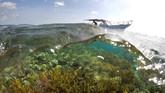 Terumbu karang dan koral hidup berwarna-warni menjadi potensi wisatasekaligus berfungsi sebagai garda depan dalam menstabilkan ekosistem bawah laut.(ANTARA FOTO/Rosa Panggabean)