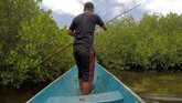 Selain mangrove pantai, Kaledupajuga memiliki hutan mangrove jenis Bruguira sp atau mangrove yang hidup di rawa daratan di Hutan Langgira untukmencegah abrasi laut dan menjadi habitat Burung Maleo.(ANTARA FOTO/Rosa Panggabean)