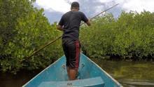Perjuangan Membangun 'Benteng' Mangrove di Tongke-Tongke