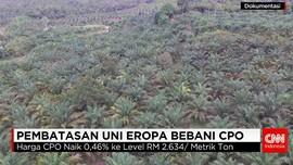 RI Desak Uni Eropa Cabut Pembatasan Impor Minyak Sawit Mentah