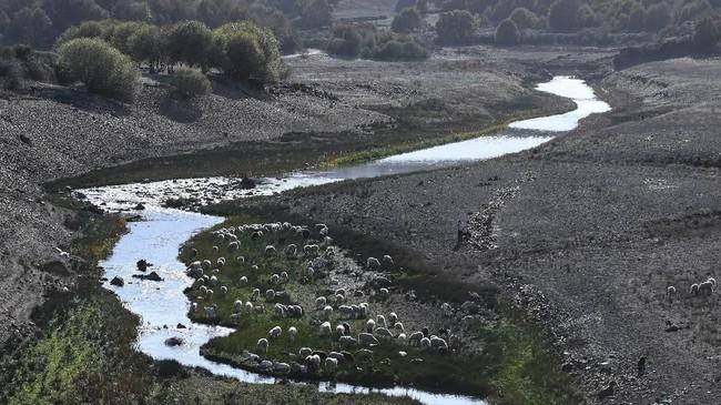 Sekumpulan kambing dan domba di tepi Sungai Bibei diViana do Bolo, wilayah barat daya Spanyol pada 27 Oktober 2017. (AFP PHOTO/MIGUEL RIOPA)