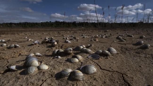 Kekeringan tampak di Waduk Buendia pada 24 November 2017. Spanyol dan Portugal menghadapi kekeringan yang mengancam tanaman pertanian dan memicu kebakaran hutan. (AFP PHOTO/PIERRE-PHILIPPE MARCOU)