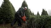 Joe Territo salah satu penjual pohon di Oregon, Carolina. Dia pun menjadi frustasi dengan adanya kenaikan biaya produksi. Dia mengungkapkan satu-satunya angka yang turun adalah keuntungan.(Justin Sullivan/Getty Images/AFP)