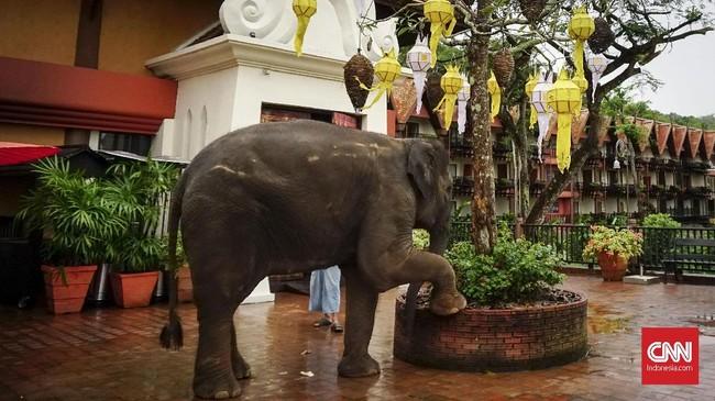 Gajah-gajah di Anantara dijaga oleh 30 penjaga, yang disebut mahout.