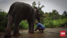 Hidup Berdampingan dengan Gajah di Resor Mewah