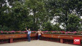 FOTO: Taman Bunga Berkabut di Chiang Rai