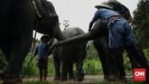 Karena gajah berbadan besar dan tinggi, serta tak dibekali pengelihatan yang sempurna, mereka tentu saja takut dengan benda kecil yang bergerak di bawah kaki mereka, seperti tikus dan ayam.