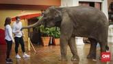 Anantara Golden Triangle Elephant Camp & Resort menawarkan kegiatan mengenal gajah, memandikan gajah, sampai sarapan dan makan malam bersama gajah.