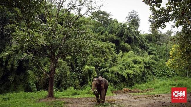 Anantara Golden Triangle Elephant Camp & Resort memiliki fasilitas kamp penampungan gajah, yang juga bisa diajak berinteraksi dengan tamunya.