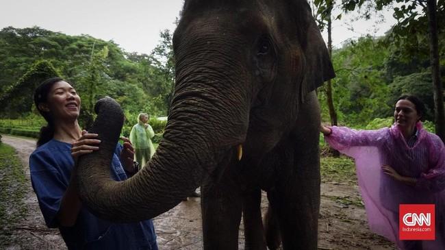 Hingga tahun ini, hanya tersisa 415 ribuan ekor gajah liar di Afrika dan 40 ribuan ekor gajah di Asia. Sisanya dimiliki oleh perorangan, yang belum tentu diperlakukan secara layak.