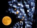 Saturnus dan Bulan Stroberi akan Menghiasi Langit Malam Ini