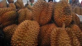 Mari Berpesta Durian di Majalengka