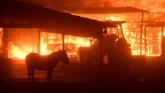 <p>Peristiwa yang disebut Kebakaran Thomas ini mengamuk di kaki buki di atas dan di tengah kota Ventura, sekitar 50 mil barat laut Los Angeles. (Reuters/Gene Blevins)</p>