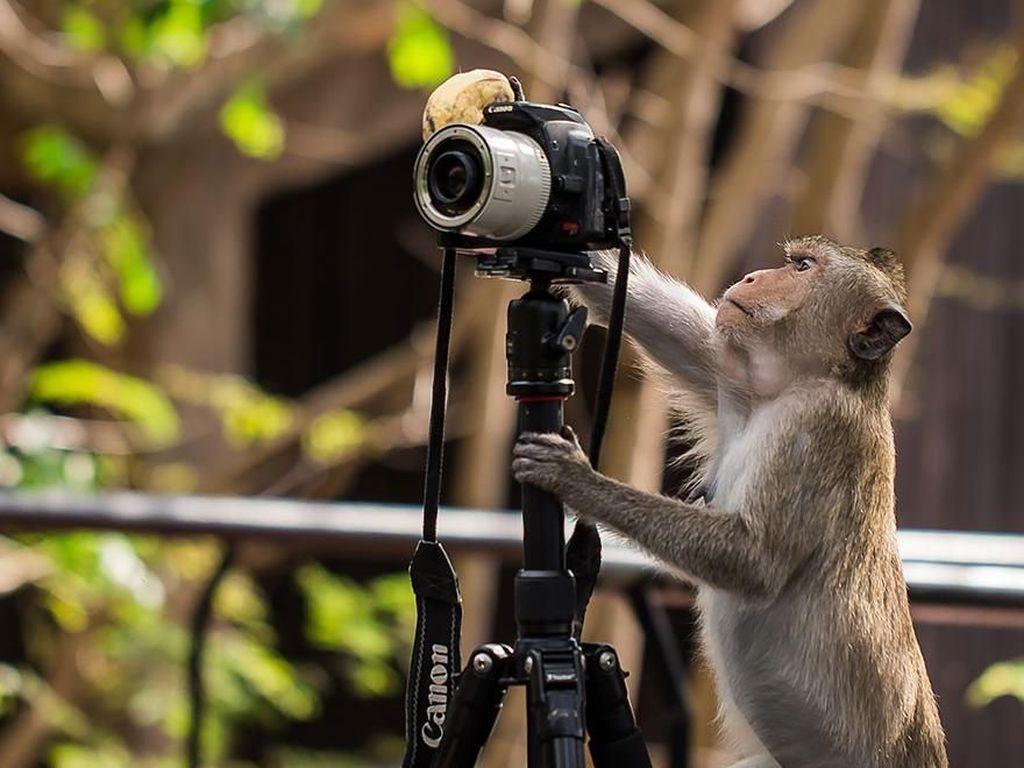 Gaya si monyet tampak sudah paham dengan kamera. (Foto: Boredpanda)