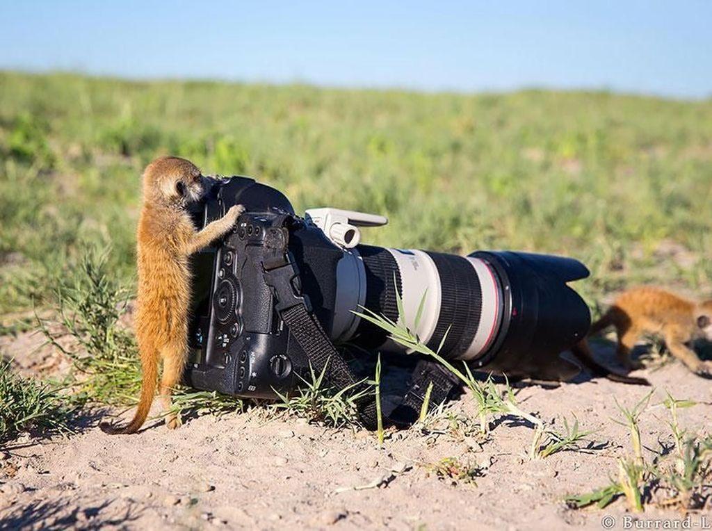 Dua hewan mungil dengan kameranya yang besar. (Foto: Boredpanda)
