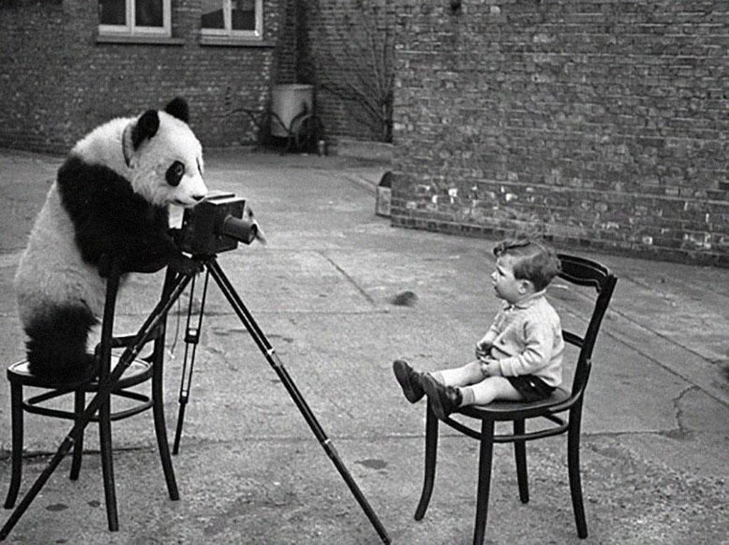 Foto yang gemas, si panda sang fotografer dengan anak bayi jadi foto modelnya. (Foto: Boredpanda)