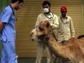 Bachtiar Nasir Minum Air Kencing Unta, Kemenkes Angkat Suara