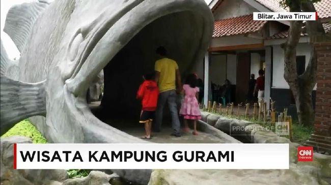 Video Berwisata Di Kampung Ikan Gurami