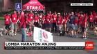 Ratusan Anjing Beradu Cepat Lari Maraton