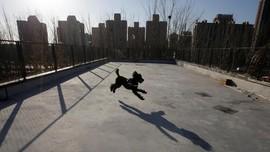 FOTO: Tren Bisnis Memanjakan Hewan di China