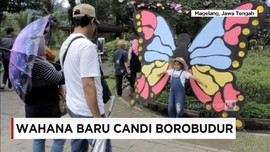VIDEO: Kupu-kupu Raksasa Hiasi Candi Borobudur