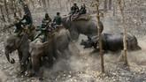 Relokasi lima badak, satu jantan dan empat betina di Taman Nasional Shuklaphanta, 510 kilometer dari Ibu Kota Nepal, Kathmandu, 4 April 2017. Para pakar konservasi berusaha mengembangbiakkan badak untuk mencegah kepunahan hewan yang banyak dibunuh para pemburu cula itu. (AFP PHOTO / PRAKASH MATHEMA)