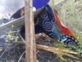 VIDEO: 10 Warga AS Jadi Korban Kecelakaan Pesawat Kosta Rika