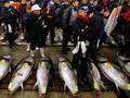 Serbuan Tikus di Pasar Ikan Legendaris Jepang
