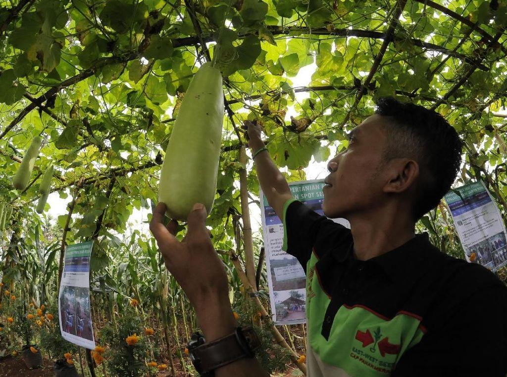 Ewindo membentuk kelompok Petani Muda Panah Merah untuk bertukar informasi inovasi teknologi pertanian, pengenalan benih unggul, pengendalian hama dan penyakit. Pool/Ewindo.