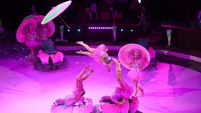 Seorang akrobat sirkus Hungaria, Kevin Ritcher, menyebut bahwa salah satu keunggulan sirkus adalah penonton melihat pertunjukan secara alamiah, bukan hasil suntingan komputer. (AFP PHOTO / Attila KISBENEDEK)