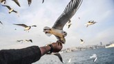 <p>Seorang pria yang berada di bagian belakang sebuah kapal feri sedang memberi makan burung camar di selat Bosphorus, Istanbul, Turki. (AFP/Bulent Kilic)</p>