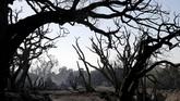 Tanah longsor itu terjadi Selasa (9/1) petang, setelah warga di daerah yang membentang di sepanjang pantai utara Los Angeles itu diperintahkan untuk mengungsi. (Justin Sullivan/Getty Images/AFP)