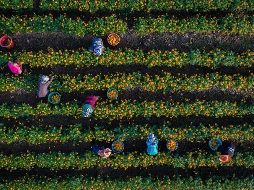 Keindahan aktivitas petani di lihat dari jepretan drone. Foto: Bored Panda