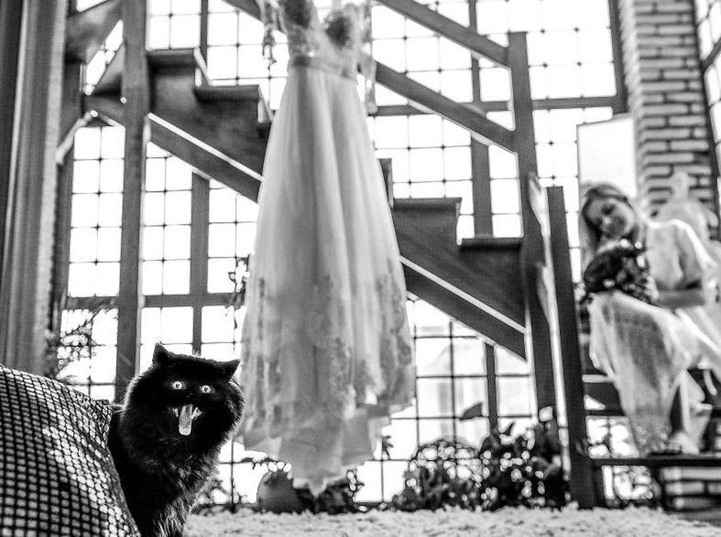 Ada apa dengan kucing ini yaa? Foto: Bored Panda