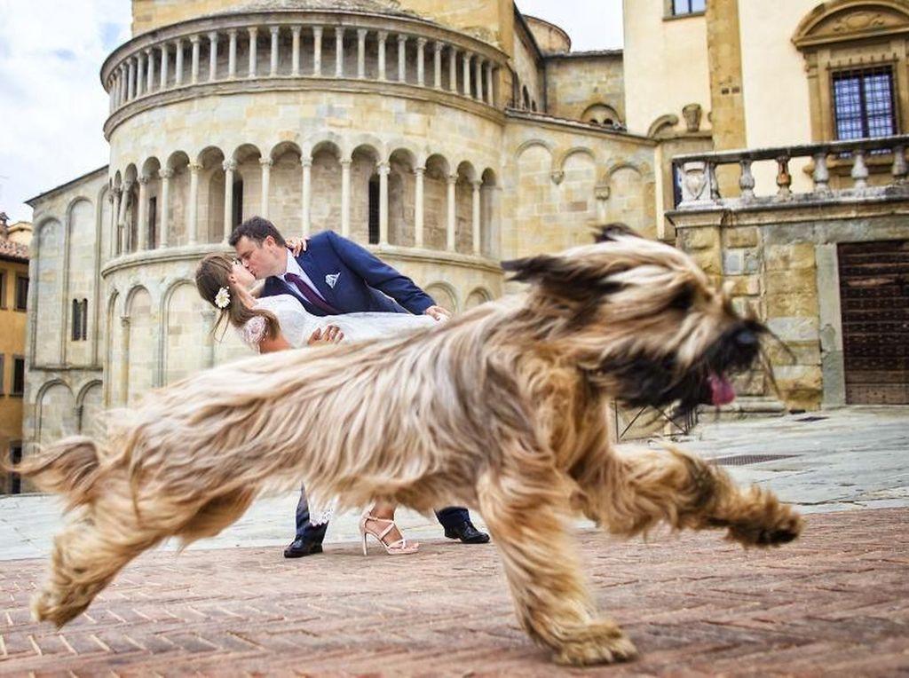 Ini sih photobomb judul foto weddingn-nya. Foto: Bored Panda
