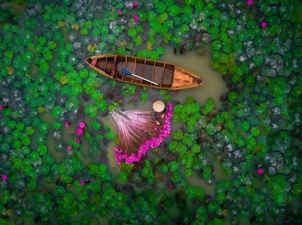Seorang wanita memanen bunga lili di Mekong Delta di Vietnam. Foto: Bored Panda