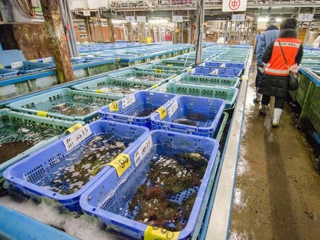 Di Pasar dalam, terdapat gudang besar yang mencakup area pemeriksaan ikan hidup. Pembeli dapat memeriksa ikan dan makanan laut di dalam keranjang sebelum membelinya.Foto: Pasar Tsukiji. (Dok. Everintransit)