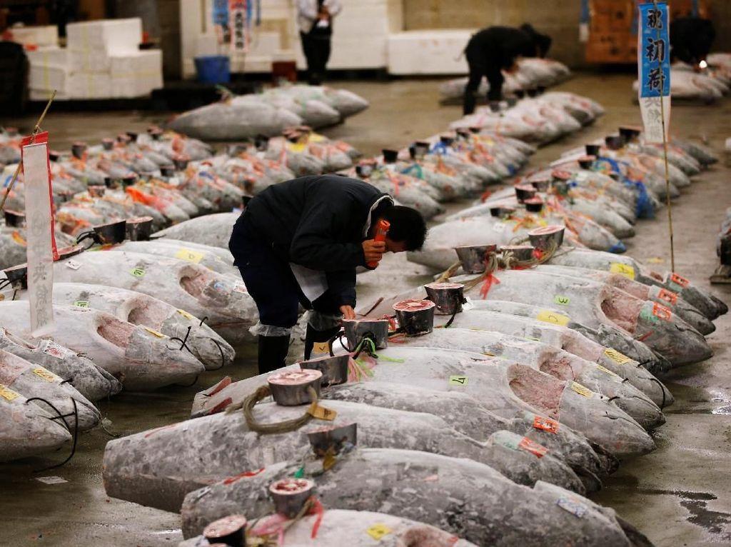 Selain tuna segar, terdapat juga pelelangan ikan tuna beku. Seorang ahli melihat kualitas ikan tuna yang dilelang. Foto: Pasar Tsukiji. (Dok. Reuters)