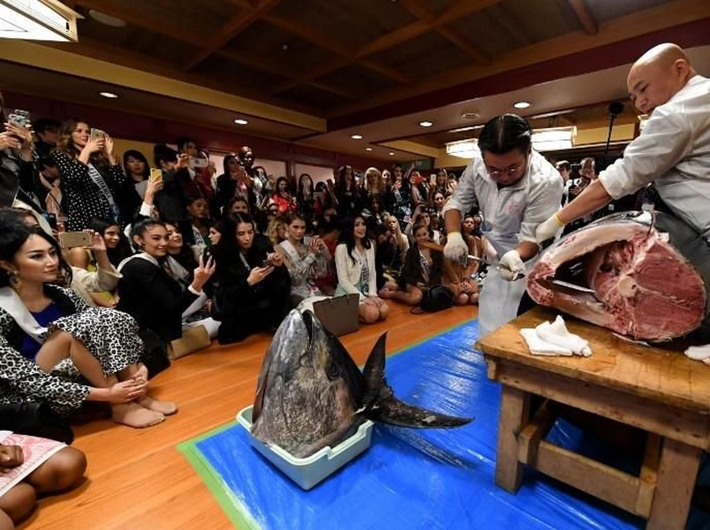 Tak hanya sekedar makan. Para kontestan Miss Internasional melihat langsung koki mempersiapkan ikan tuna sebagai sajian mereka. Foto: Pasar Tsukiji. (Dok. AFP)