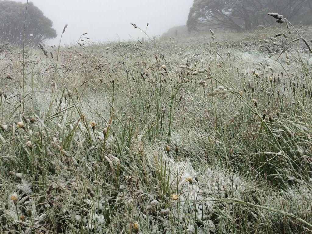 Salju jatuh di resor ski yang tertutup dan Gunung Hotham di Victoria. (Foto: Dok. Instagram hothamalpineresort)