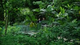 Forest Walk, Solusi Hutan di Tengah Kota Bandung