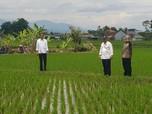 Jokowi: Petani Harus Bisa Jual Beras, Bukan Gabah