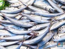 Susi Incar Nilai Ekspor Ikan Rp 10,8 T ke Jepang dan Eropa
