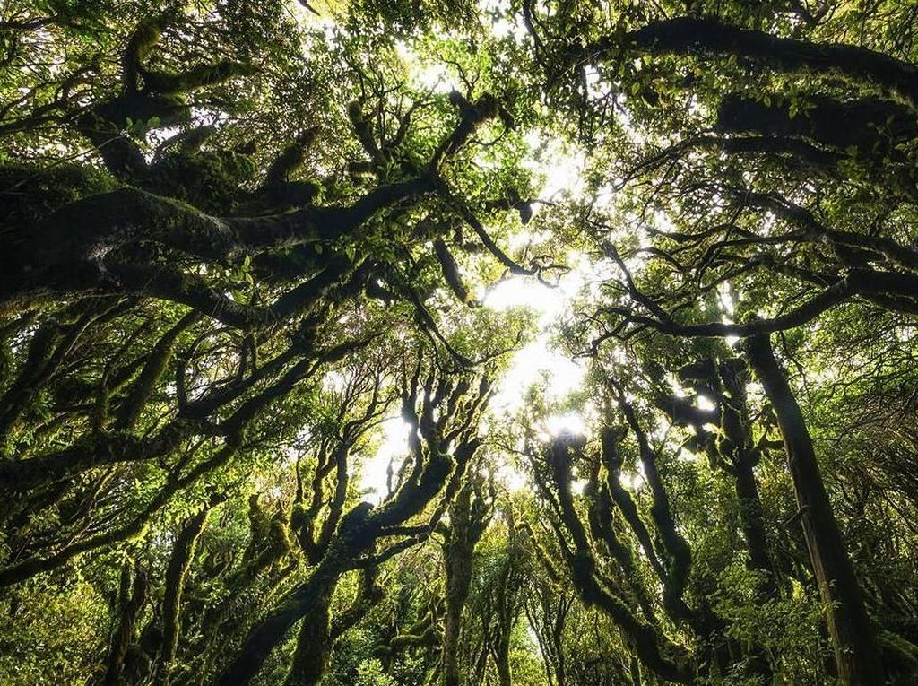 Foto: 6 Hutan Paling Misterius di Dunia