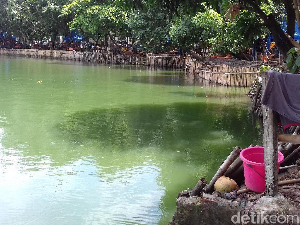 Berwarna Hijau, Ini Danau Sunter Lokasi Lomba Renang Sandiaga-Susi